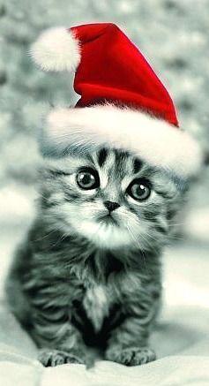 Christmas kitty....
