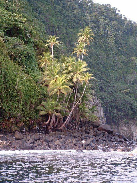 Isla del Coco 002