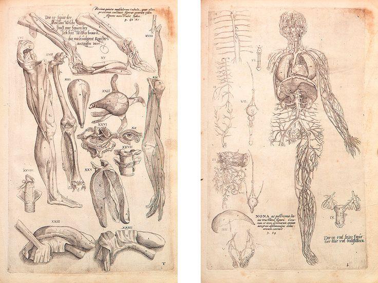 Научная, медицинская иллюстрация и анимация: как врачам и ученым общаться друг с другом, студентами и остальным человечеством / Блог компании Visual Science / Хабрахабр