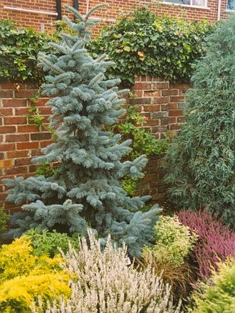 17 best images about shrubs on pinterest hedges drought for Evergreen landscapes christchurch
