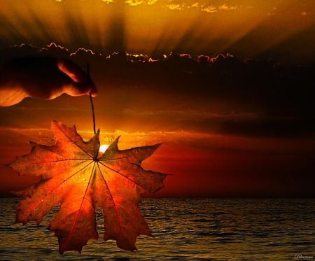*An autumn sunset* - hand, nature, sea, autumn, horizon, sunset, splendor, sky, fall, sunrays, hq, leaf, season