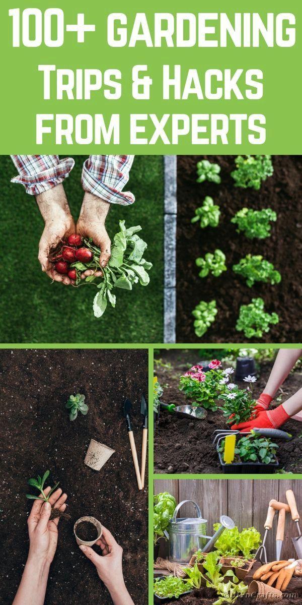 363af08dea04f0b11d3f3f9f1565547a - Expert Gardener 10 10 10 Fertilizer