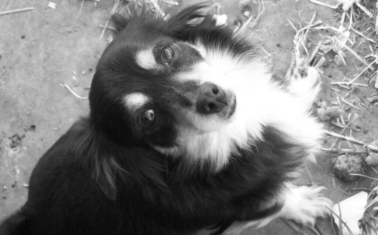 """A photo I took of my lovely but hyperactive dog named Patricia """"Pippy""""."""