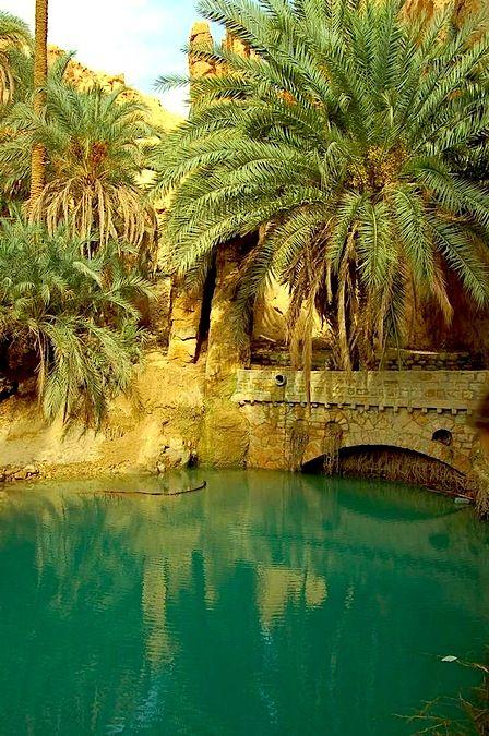 Chebika Oasis in the Sahara Desert | Al-Qayrawan, Tunisia (North Africa)