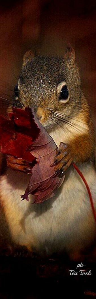 "Squirrel:  ""I miss you most of all - when autumn leaves start to fall..."""