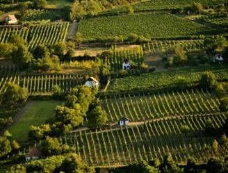 Kevesebb de kiváló borokat kóstolhatunk a 2012-es évjáratból