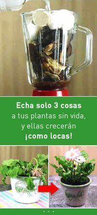 Echa solo 3 cosas a tus plantas sin vida, y ellas crecerán como locas – #Como #…