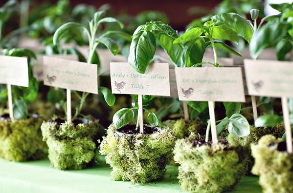 moss-covered herb containers as wedding favors