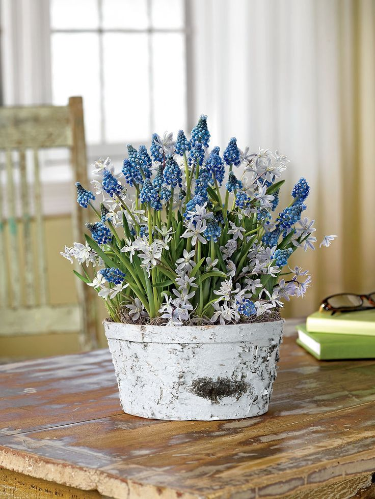 Indoor Gardening Gifts 17 best gifts that grow images on pinterest bulbs amaryllis bulbs muscari and scilla gift basket winter crisp bulb garden workwithnaturefo