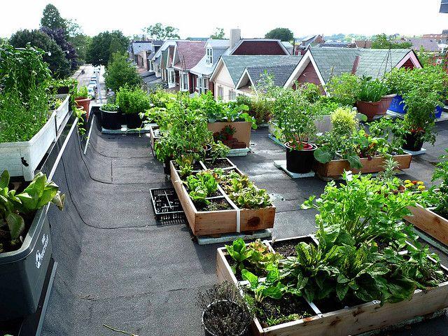 Best Urban Garden Rooftop Vegetable Gardens Images On - Rooftop vegetable garden ideas