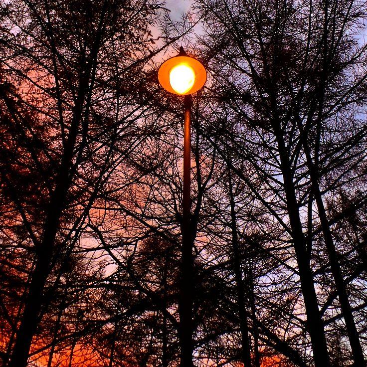 A dense dense forest being illuminated by a solitary light at Tilgate Park.. #light #dense #silhouette #landscape #landmark #amazingsky #solitary #forest #nature #tilgatepark #crawley #sussex
