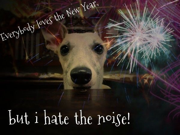 On New Year's Eve keep your pets in a safe enclosed room, where they feel comfortable, with plenty of water and pet food. #petsafety