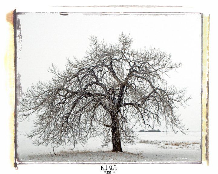 Winter tree.  Photography by Nicole Griffin