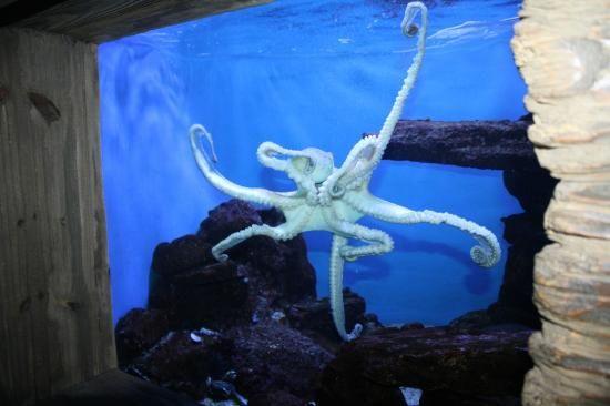 uShaka Marine World Photo: Octopus, really lovely aquarium