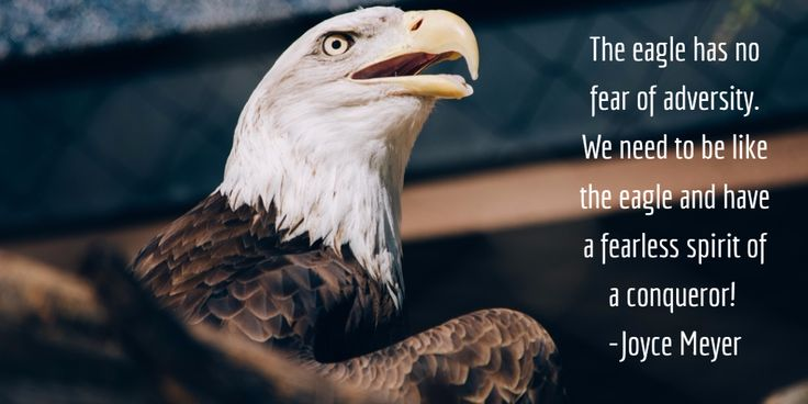 The Eagle Has No Fear Of Adversity We Need To Be Like The Eagle And Have A Fearless Spirit Of A Conqueror Joyce Meyer Eagle Pictures Eagle Fearless