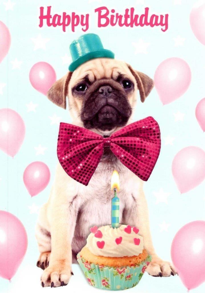 2 29 Gbp Pug Dog Happy Birthday Greeting Card Fun Tracks