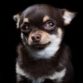 Les 18 plus beaux portraits de chiens et chats signés Rob Bahou