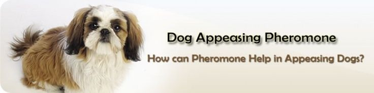 Dog Appeasing Pheromones for stress and separation anxiety