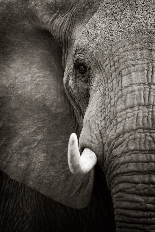 Incredible photo.. Love love love elephants