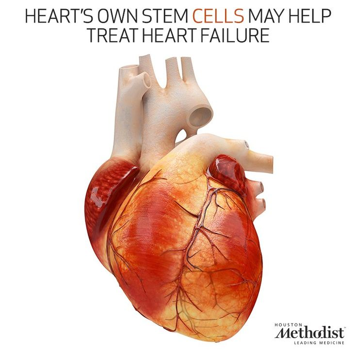 Heart's own stem cells offer hope for new treatment of heart failure.