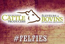 New Brunswick Cattle Producers