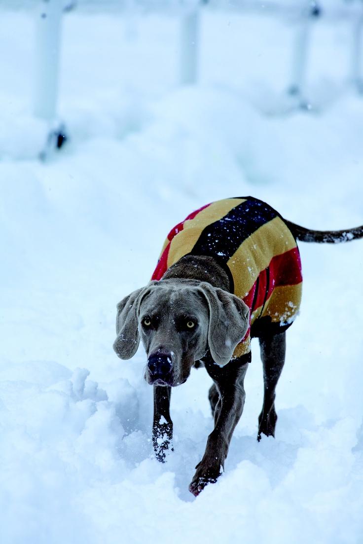 Having Fun In The Snow A Warm Newmarket Fleece Horseware Dog Rug