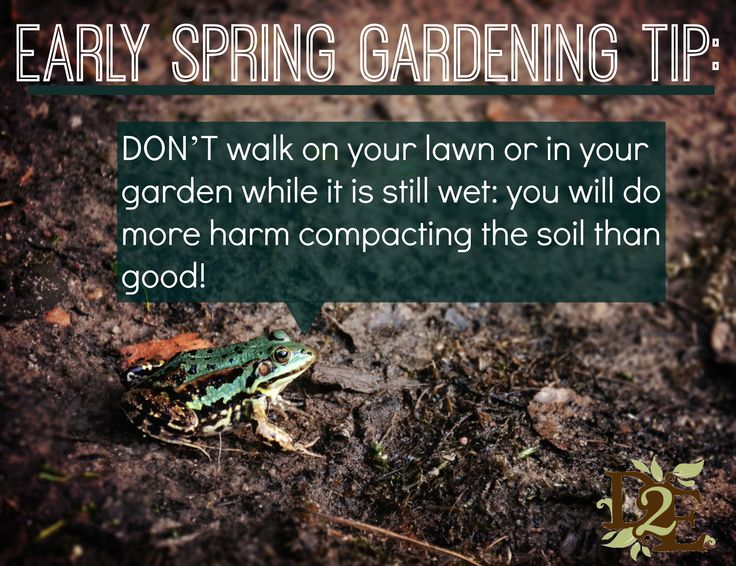 Stay out of the garden in early spring!