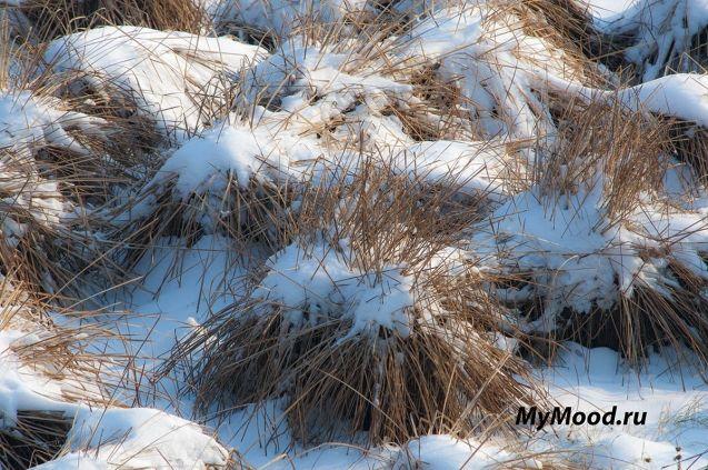 Снежные ежики и снежное настроение
