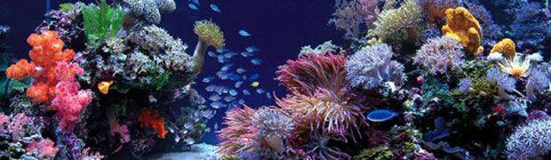 4 Simple Ways To Lower Aquarium pH Naturally