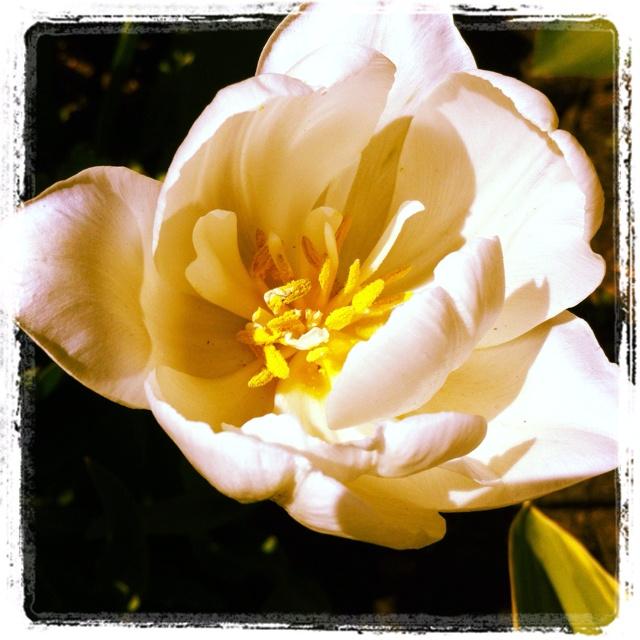 May Garden -- Day 6