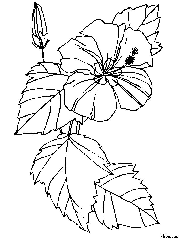 Hibiscus Flowers Coloring Pages Book