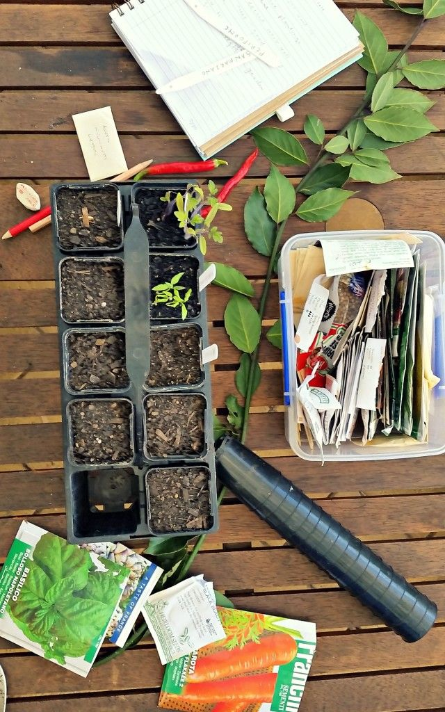 Sowing Seeds for Summer - Rosehips and Rhubarb