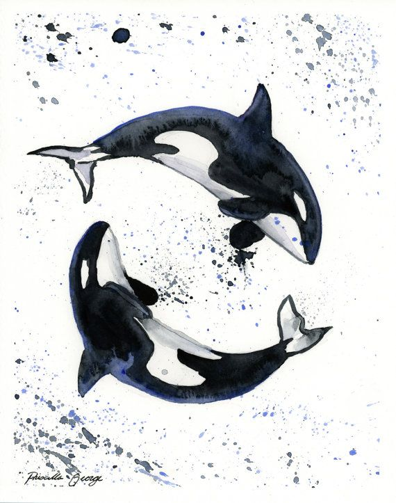 Orca Whales Watercolor Painting Print 5 x 7 by PriscillaGeorgeArt