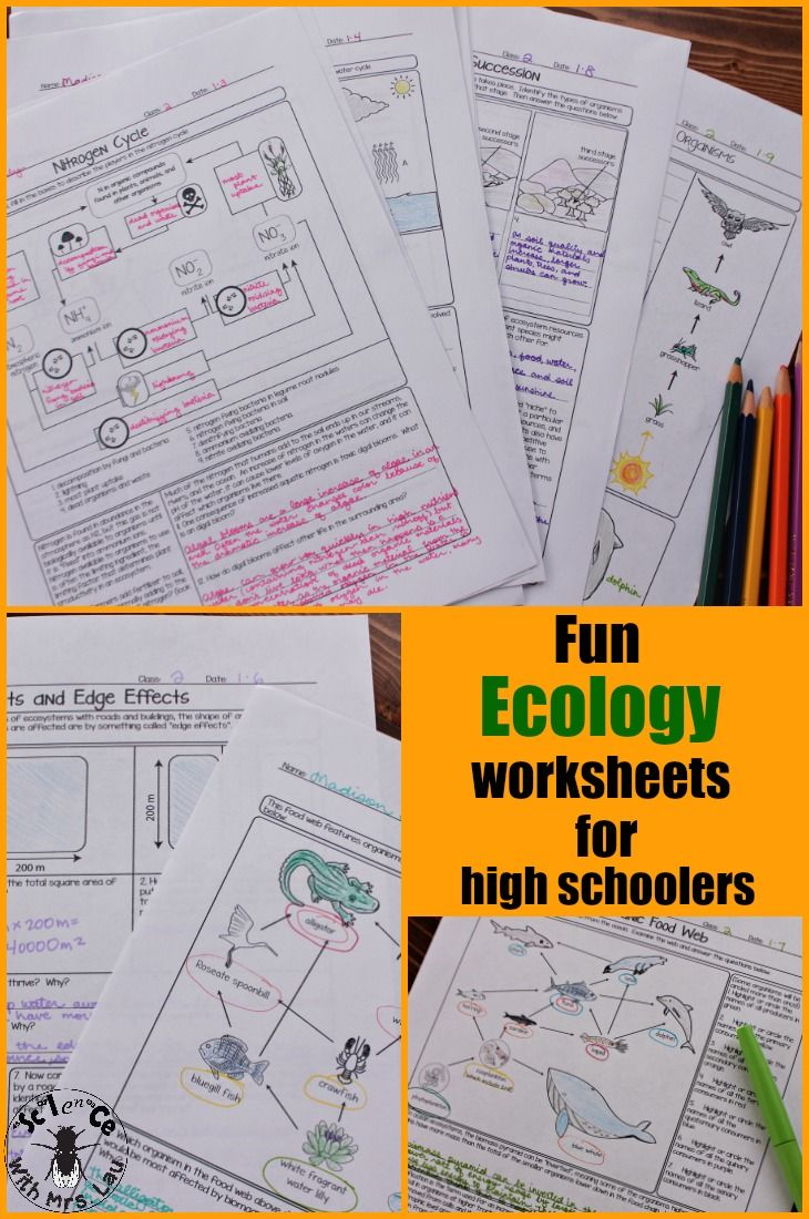 These ecology worksheets covers the whole unit of ecology.  Pages include the water cycle, the nitrogen cycle, the carbon cycle, and several different types of food webs!