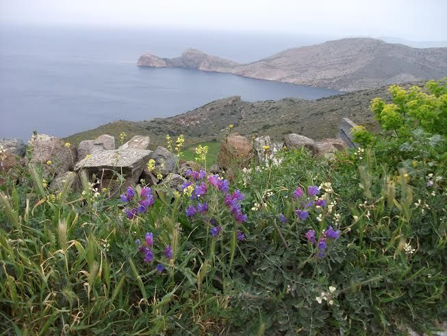 Amazing view with wild flowers