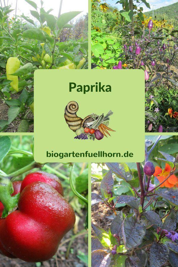 176 best Garten Gruppenboard images on Pinterest