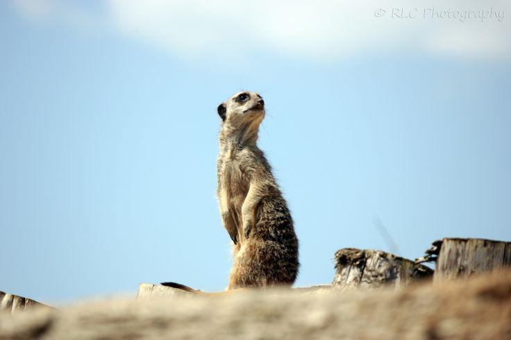 https://flic.kr/p/qPiNzC | Longleat Zoo | July 2013