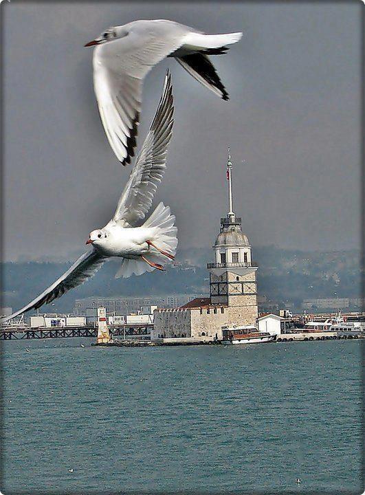 ✿ ❤ Martılar ve Kız Kulesi - İstanbul İstanbul!!
