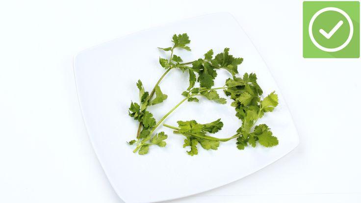 Aprende a mantener el cilantro fresco vía es.wikihow.com