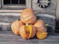 "Originating from an Amish gardener, this squash produces very large fruit: up to 80 pounds each. As its name suggests, it's great for baking pies and also freezes well.  ""One would be enough to feed a whole Amish community,"" says Diane Ott  Whealy, co-founder of  Seed Savers Exchange , who makes her yearly  Thanksgiving pies from this pumpkin variety."