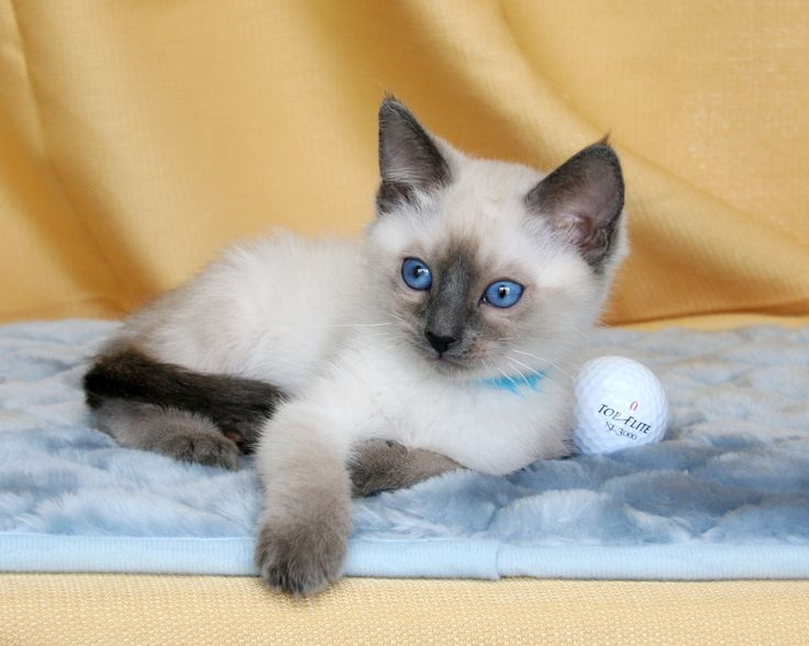 16559 best on stand by pics board images on pinterest for Siamese 9 electric motor