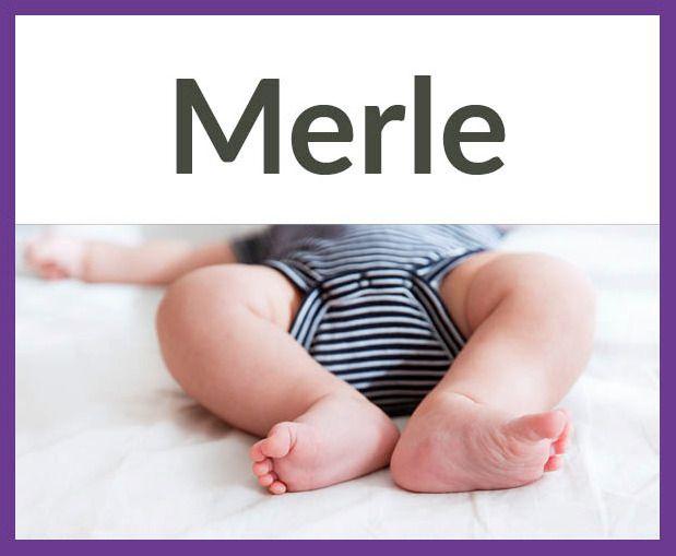Tolle Vornamen mit fünf Buchstaben Herkunft: Englisch, Bedeutung: Amsel