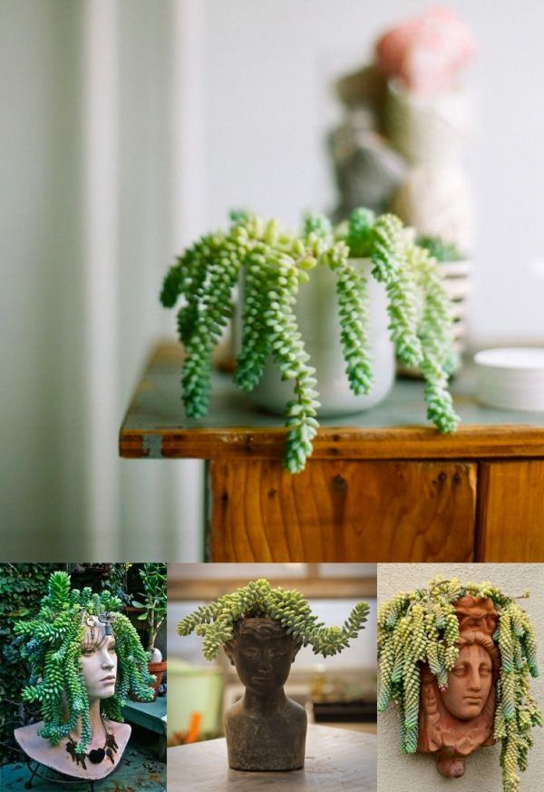 21 Best Plants And Flowers Images On Pinterest House