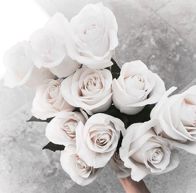 Me encanta las rosas blancas.. son la pureza del alma