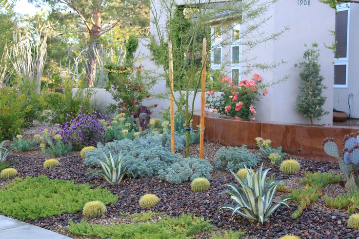 16 best images about drought tolerant front yard on for Garden design las vegas