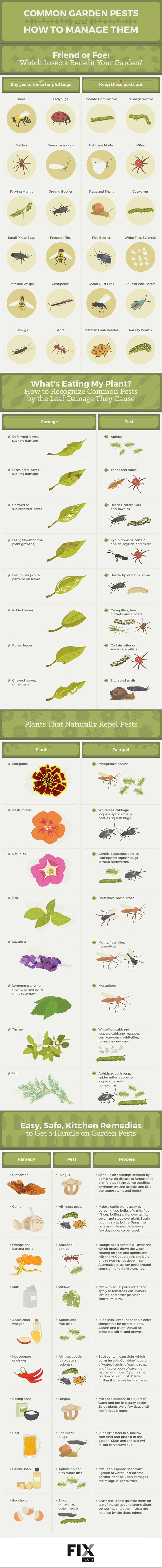 Common Garden Pests  this is a great guide to help identify garden pests and to help managed pests in the garden. Identify those insects that are beneficial to your garden.   Garden, Tea, Cakes and Me