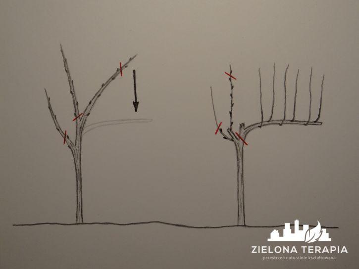 W najbardziej klarowny sposób, wyjaśniamy temat cięcia winorośli, pojęcia dotyczące budowy, okresów i sposobu cięcia winogron. | http://ZielonaTerapia.pl/portfolio/nadzor-nad-realizacja-ogrodu-hortiterapeutycznego/