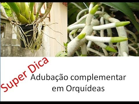 Adubação Complementar de Orquídeas