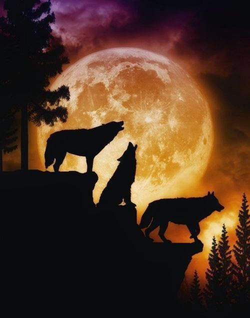 WOLVES Howling at the MOON.