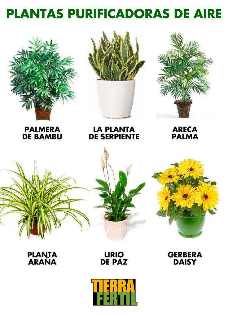 17 best ideas about plantas purificadoras de aire on - Plantas del interior ...